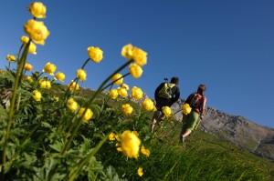 foto orler settimana fiori val di fiemme 300x199 PREDAZZO, settimana ERBE, FIORI e SAPORI