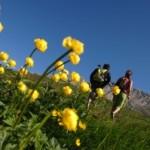 foto orler settimana fiori val di fiemme 300x1991 150x150 La Val di Fiemme protagonista di Uno Mattina in Famiglia. I Presepi di Tesero e gli artisti del legno