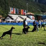 dobermann val di fiemme 2 150x150 Tempi duri... per i felini di Fiemme: 650 dobermann si contenderanno il titolo di Campione del Mondo
