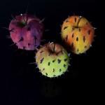 forbidden fruits marco nones 1 150x150 MOSTRA DARTE, a Ferrara la Rivoluzione della specie di Marco Nones