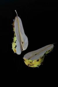 fruit forbidden 4 a 199x300 VetrinArt, Cavalese mostra itinerante di Marco Nones