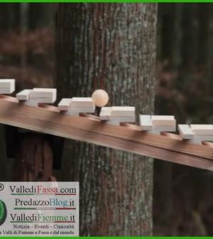 xilofono di legno nel bosco fiemme