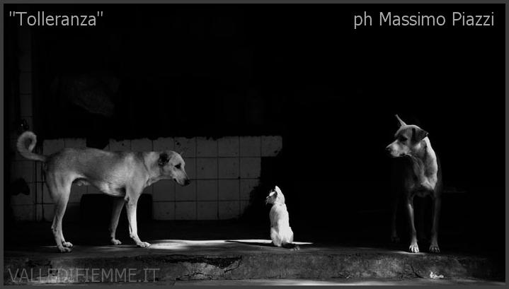 massimo piazzi ph tolleranza valle di fiemme Fotografare l'autenticità: Massimo Piazzi