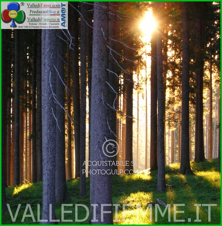 bosco fiemme Cavalese, convegno alla Rosa Bianca nella «Giornata mondiale delle foreste»