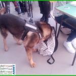 cani antidroga scuole 150x150 Il CFP Enaip di Tesero verso lalta formazione professionale