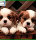 sgambatura per cani cavalese fiemme