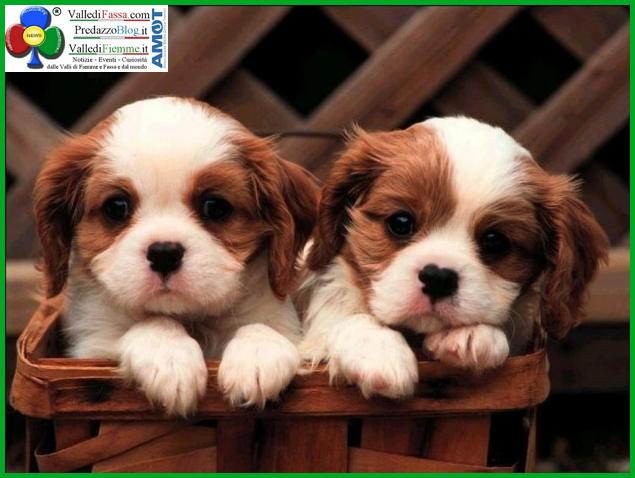 sgambatura per cani cavalese fiemme Cavalese inaugura la nuova area di sgambatura per cani