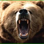 orso trentino 150x150 Cavalese, Su par Vila vince la Caccia allOrso 2015