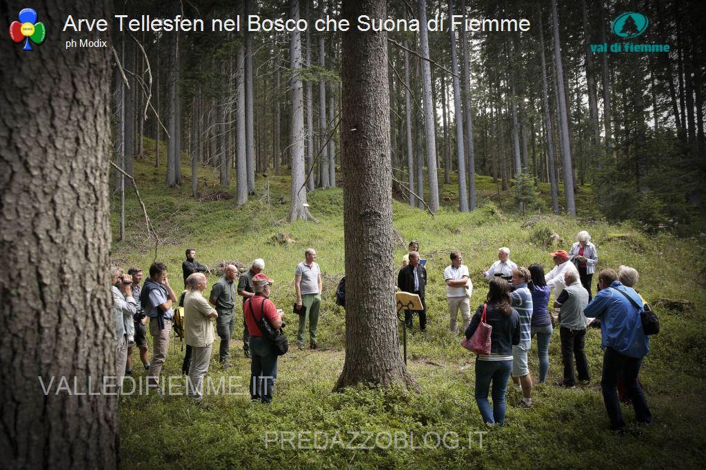 Arve Tellesfen nel bosco che suona in valle di fiemme1 Al violinista norvegesead Arve Tellesfen un abete del Bosco che Suona