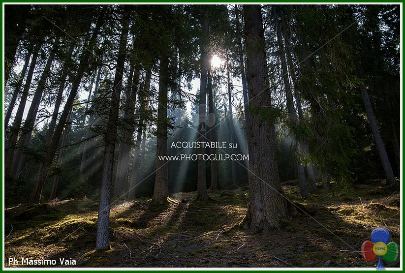 bosco di fiemme Turismo, luglio da record in Valle di Fiemme