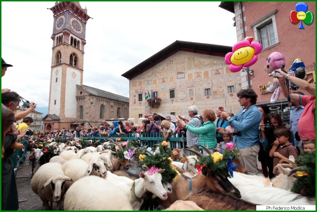 desmontegada delle capre cavalese 1024x686 La Desmontegada de le Caore a Cavalese