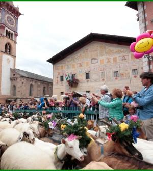 desmontegada delle capre cavalese