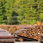 catasta legname fiemme 150x150 Recuperati i tronchi di cirmolo rubati al Lavazè