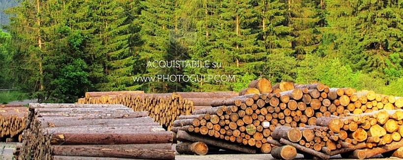 catasta legname fiemme Rubata catasta di tronchi di cirmolo al Lavazè