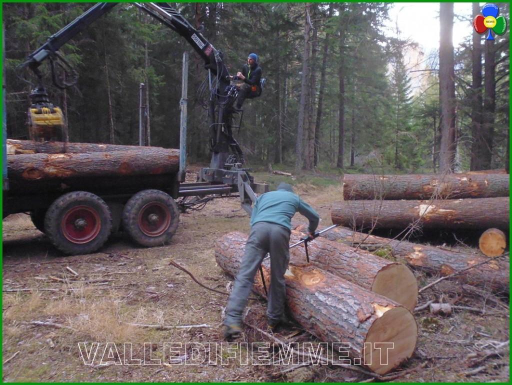 tronchi di cirmolo ritrovati a cavalese 1 1024x770 Recuperati i tronchi di cirmolo rubati al Lavazè