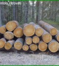 tronchi di cirmolo ritrovati a cavalese