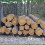 tronchi di cirmolo ritrovati a cavalese 150x150 Rubata catasta di tronchi di cirmolo al Lavazè