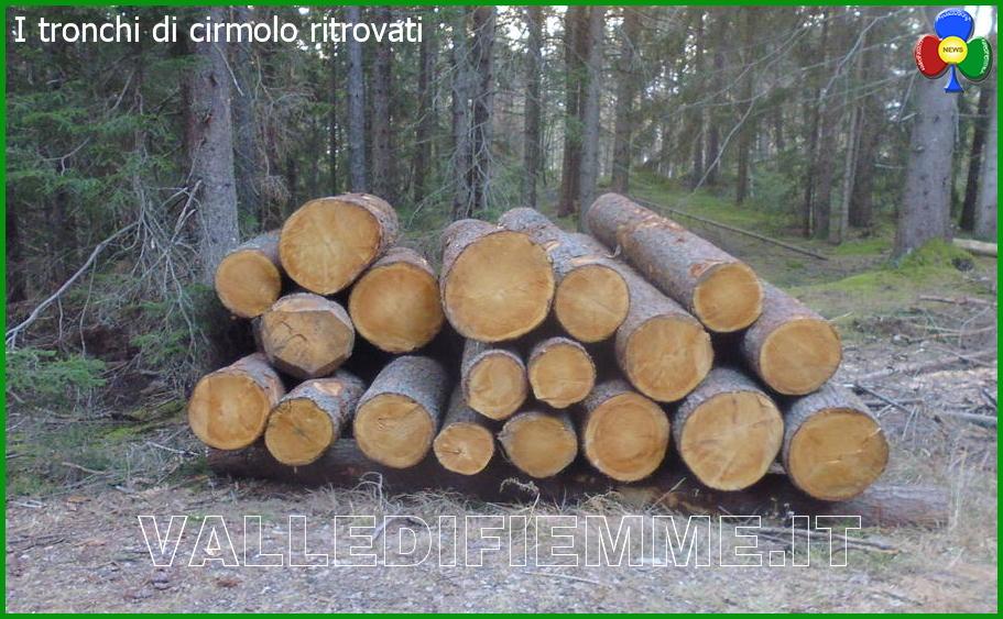tronchi di cirmolo ritrovati a cavalese Recuperati i tronchi di cirmolo rubati al Lavazè
