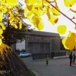 bioenergia fiemme 29.10.16 inaugurazione impianti cavalese56 150x150 Bioenergia Fiemme, inaugurati i nuovi impianti a Cavalese