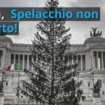 spelacchio non morto 150x150 Spelacchio riprende vita, a giugno torna a Roma   Video