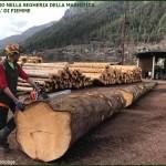 spelacchio in segheria di fiemme 150x150 Linea Verde racconta l'eco calore di FiemmePellet